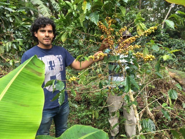FairBeans – direkter Handel von Rohkaffeebohnen aus Peru